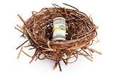Roll of dollar bills in birds nest isolated on white — Stock Photo