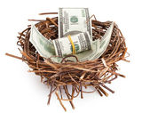 Dollar bills in a birds nest isolated on white — Stock Photo