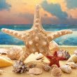 Starfish and seashells on the beach — Stock Photo #27248635