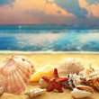 Seashells on the sandy beach — Stock Photo