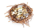 Dollar bills and coins in a birds nest isolated on white — Stock Photo