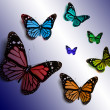 Butterfly — Stock Photo #13306671