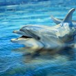 Dolphin in the sea — 图库照片