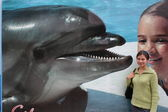 Girl on the background of a dolphin — Stock Photo