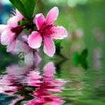 Flower — Foto de Stock   #13329247
