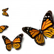 Butterfly — Stock Photo #13323664
