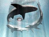 Sharks — Stock Photo