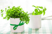 Basil and parsley — Stock Photo