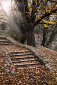 Autumn stairway — Stock Photo