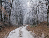 Winter forest path — Stock Photo