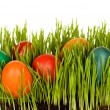 Easter eggs in grass grown indoors - Stock Photo