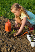 Little girl planting tomato seedlings — Stock Photo