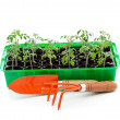 Seedlings in germination tray with gardening tools — Стоковая фотография