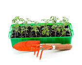 Seedlings in germination tray with gardening tools — Stock Photo