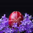 Fresh spring flowers and dyed easter egg - Stock Photo