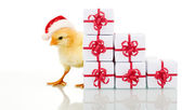 Christmas chicken with presents — Stock Photo