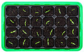 Germination tray with small seedlings — Stock Photo
