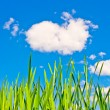 Landscape with green grass and blue sky — Stock Photo