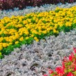 Decorative flower bed — Stock Photo