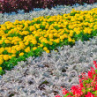Decorative flower bed — Stock Photo #16265875
