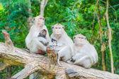 家庭的猕猴 — 图库照片