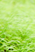 Background green grass — Stock Photo