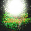 Mystical light — Stock Photo