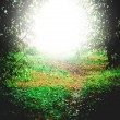 Stock Photo: Mystical light