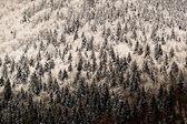 Paisagem de inverno alpino — Foto Stock