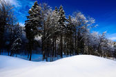 Alpine winter landschap — Stockfoto