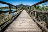 Sebino peat bog, Lombardy, Italy — Foto Stock