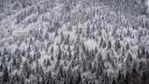 зимний пейзаж горы — Стоковое фото