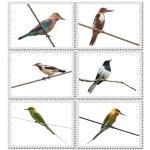 Birds of India — Stock Photo