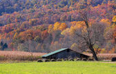 Farm in autumn — Stock Photo