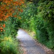 Walking trail — Stock Photo #13831220