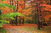 Scène d'automne — Photo