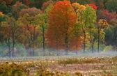 Oradaki 6 sonbahar sahne — Stok fotoğraf