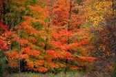 Trees in Maybury park — Stock Photo