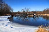 Winter pond — Стоковое фото
