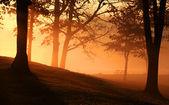 Early morning scene — Stockfoto