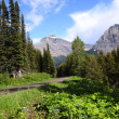Glacier national park in summer — Stockfoto