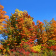 Colorful autumn trees — Stock Photo #32559873