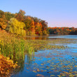 Autumn lake — Stock Photo #32559891
