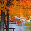 Autumn  tree by the lake — Stock Photo