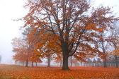 Mglisty krajobraz jesień — Zdjęcie stockowe