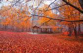 Beautiful fall scene — Fotografia Stock