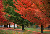 Drive way by colorful trees — Stock Photo