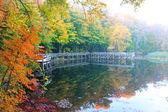 Autumn morning fog — Stock fotografie