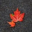 Two small maple leaves — Stock Photo