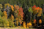 Fall color trees — Stock Photo